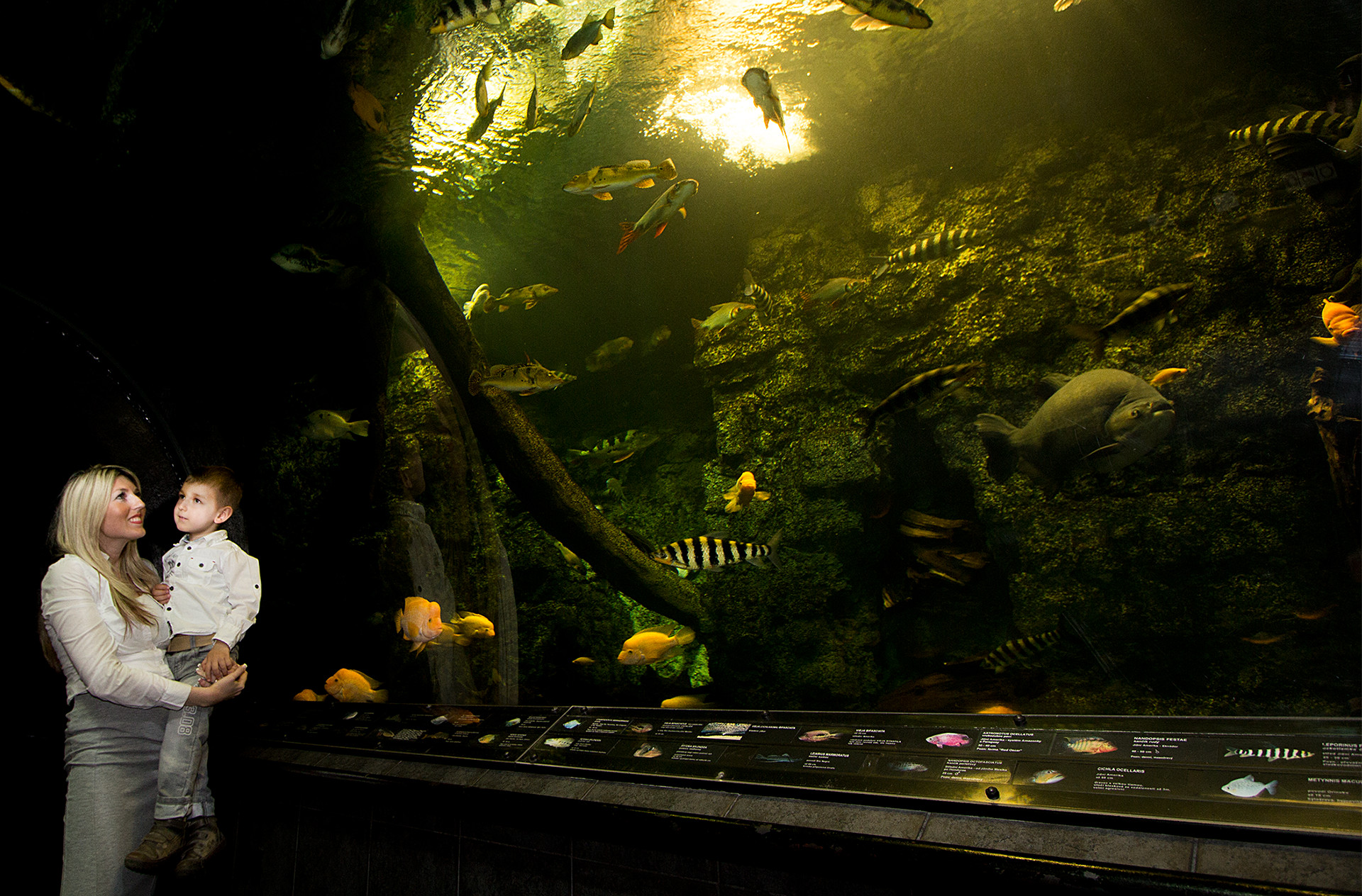 Largest fresh water aquarium in CZ